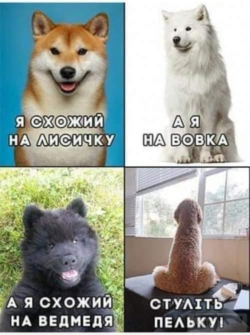 100234 - Смешные видео и фото с животными.