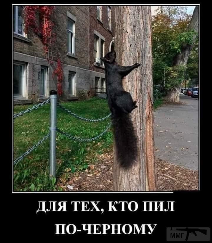 102286 - Пить или не пить? - пятничная алкогольная тема )))
