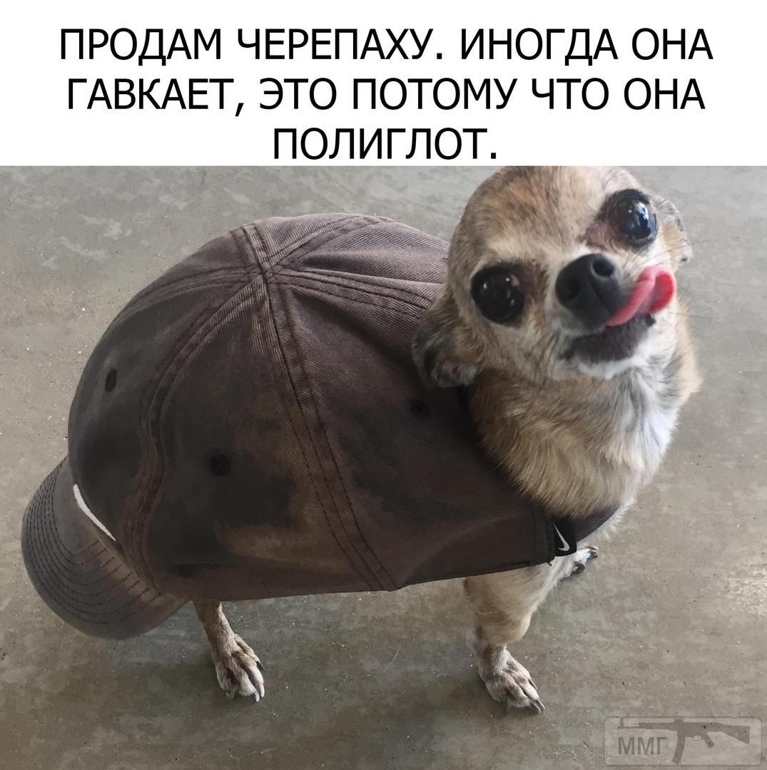 104525 - Смешные видео и фото с животными.