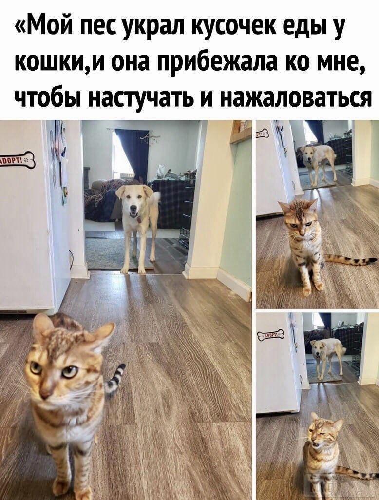 104780 - Смешные видео и фото с животными.