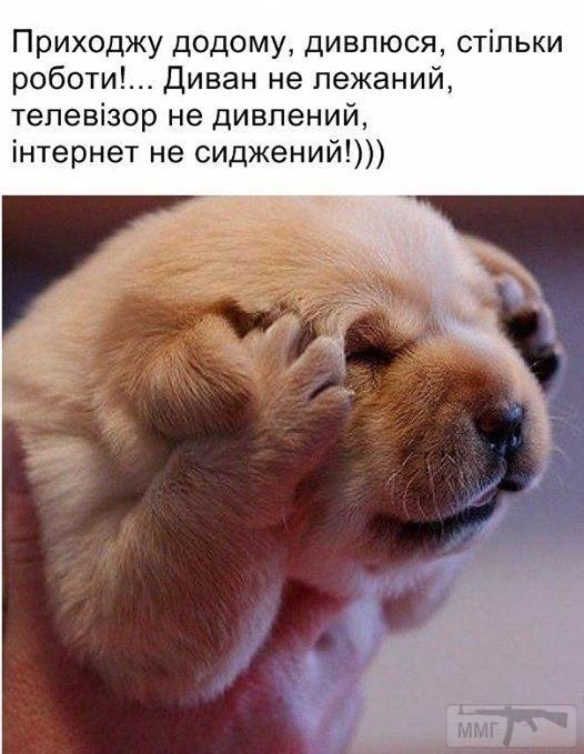 104842 - Смешные видео и фото с животными.