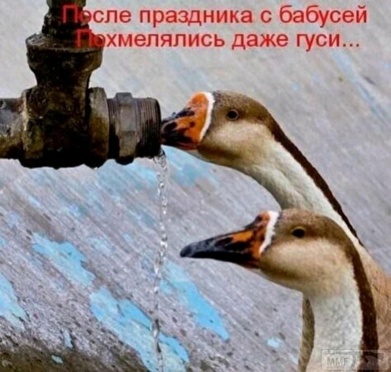 104936 - Пить или не пить? - пятничная алкогольная тема )))