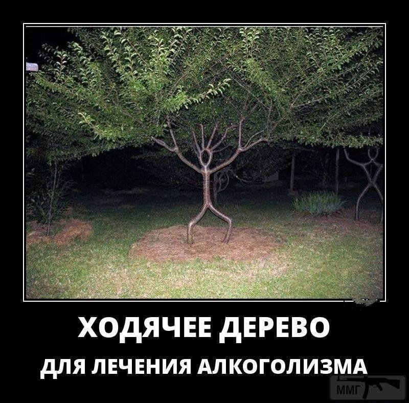 106082 - Пить или не пить? - пятничная алкогольная тема )))