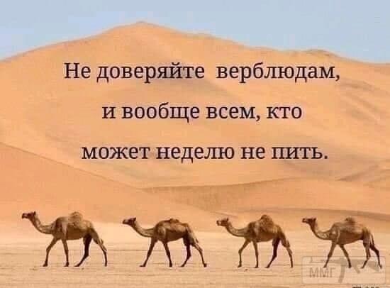 106352 - Пить или не пить? - пятничная алкогольная тема )))