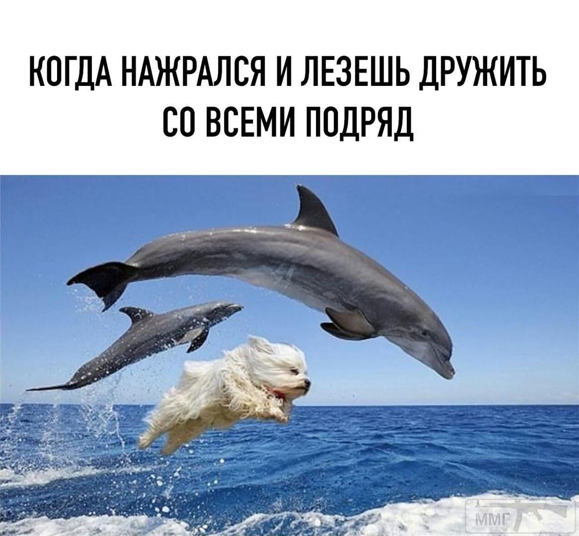 106804 - Пить или не пить? - пятничная алкогольная тема )))