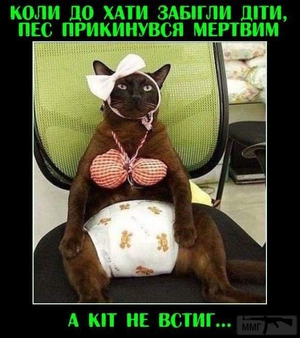 107384 - Смешные видео и фото с животными.