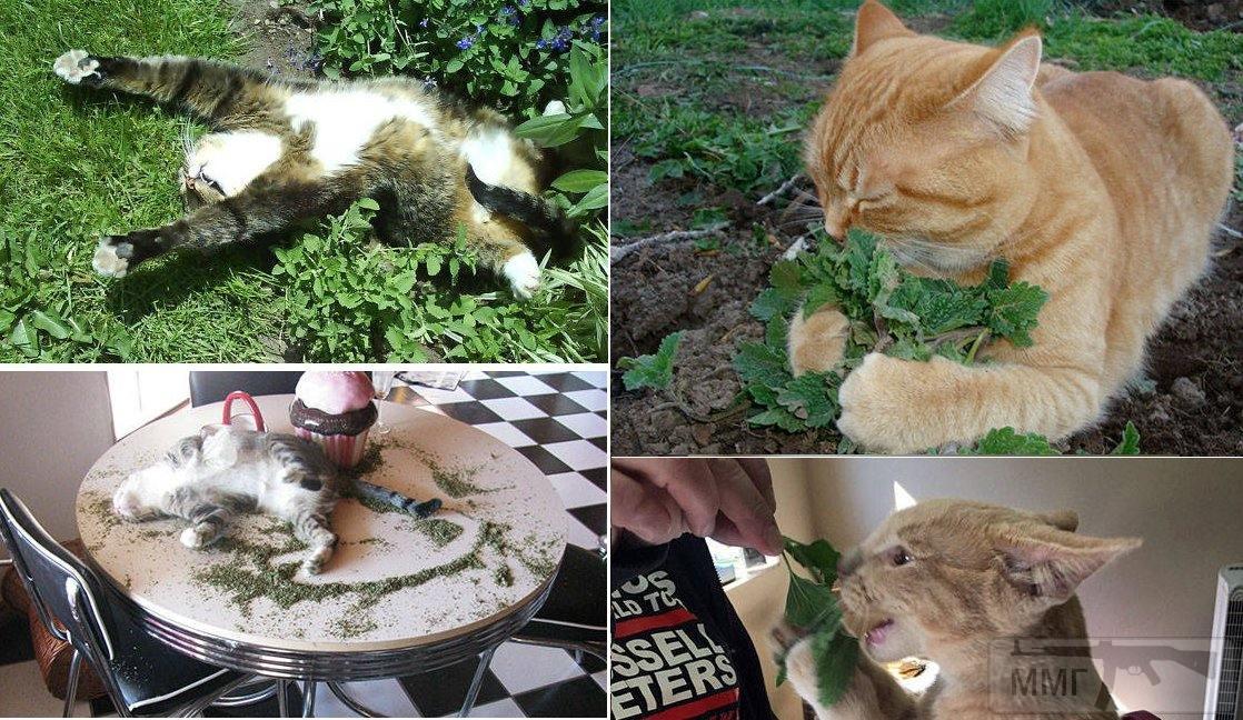 107420 - Смешные видео и фото с животными.