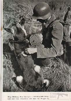 107560 - Животные на войне