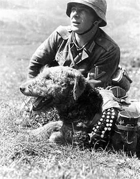 107561 - Животные на войне
