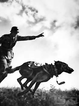 107563 - Животные на войне