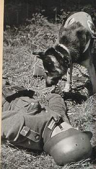 107564 - Животные на войне
