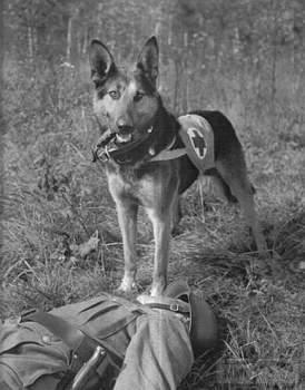 107565 - Животные на войне