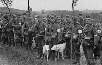 107566 - Животные на войне