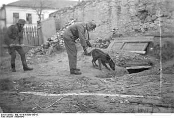 107567 - Животные на войне