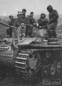 107571 - Животные на войне
