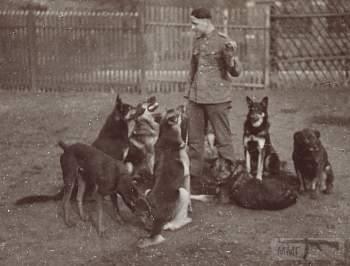 107577 - Животные на войне
