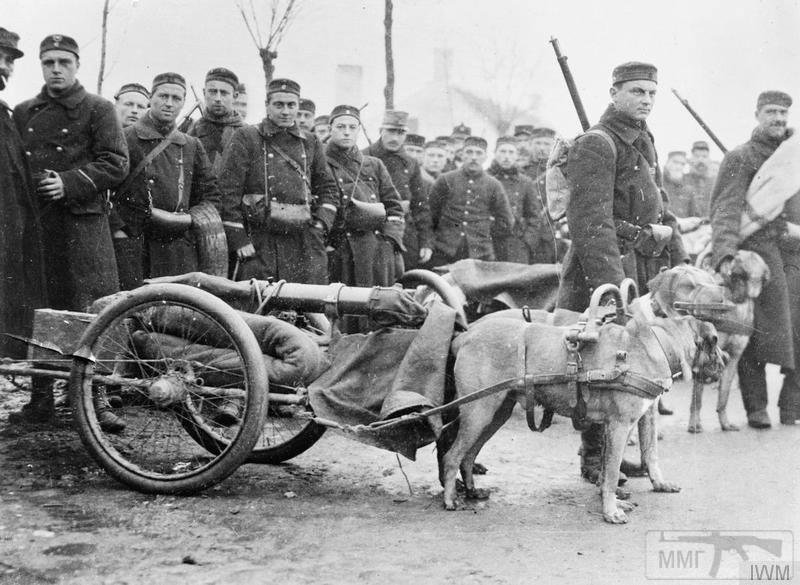 107587 - Животные на войне