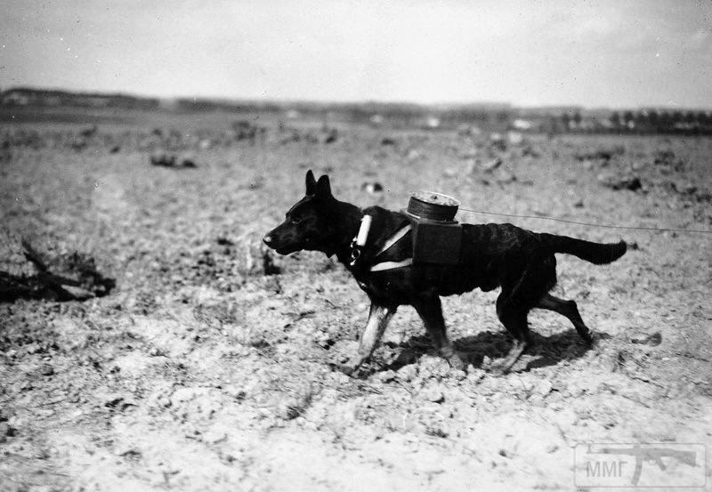 107588 - Животные на войне