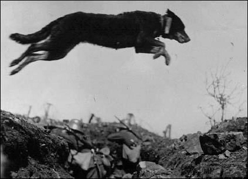 107590 - Животные на войне