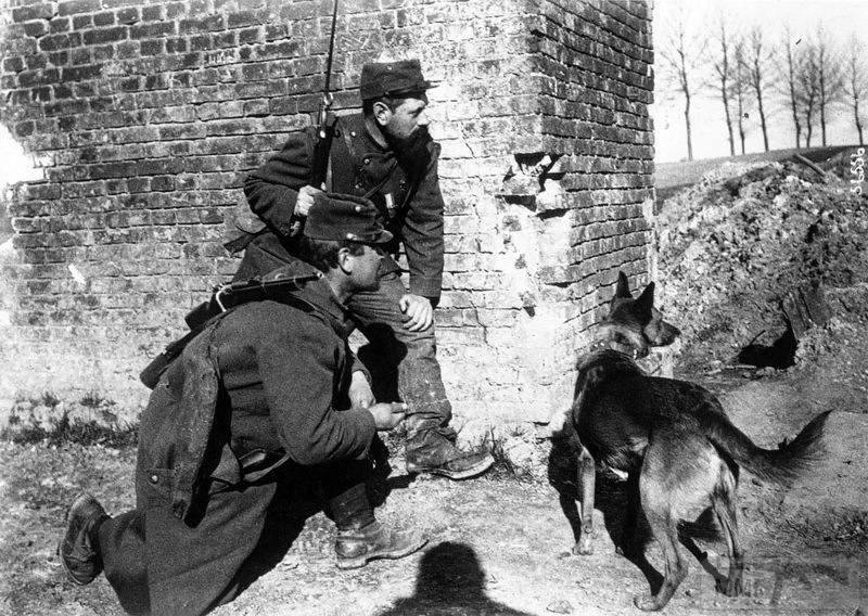 107594 - Животные на войне