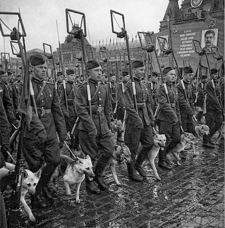 107595 - Животные на войне