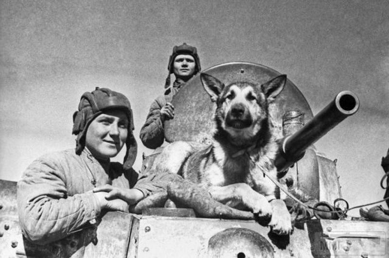 107596 - Животные на войне