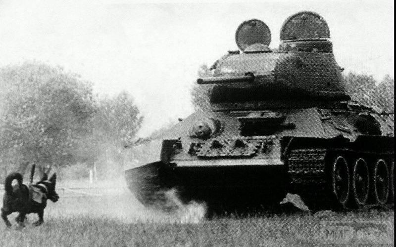 107597 - Животные на войне