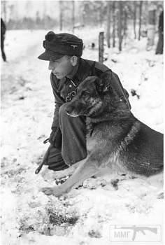 107614 - Животные на войне