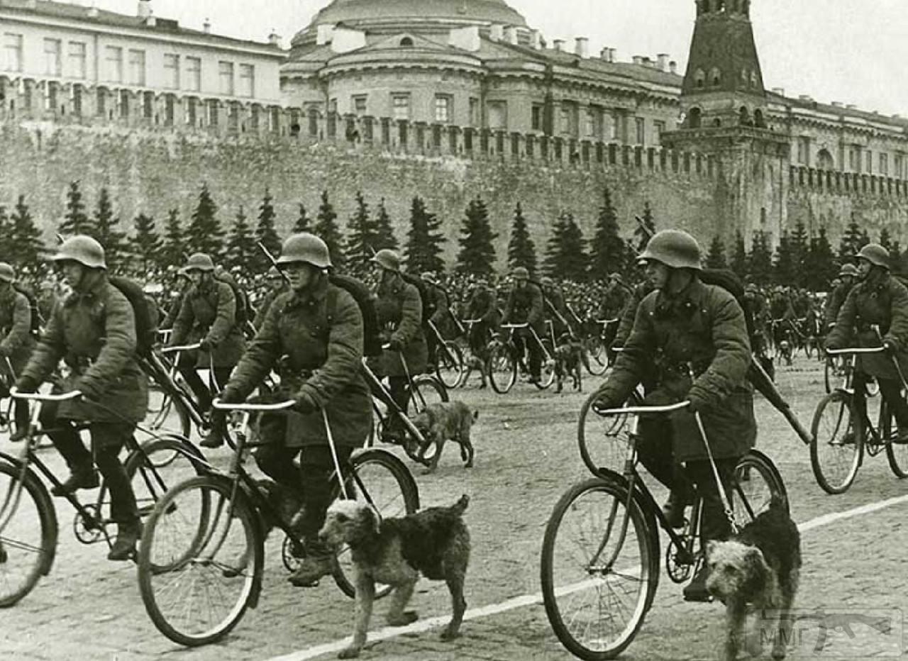 107615 - Животные на войне