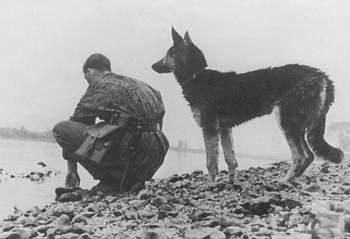 107617 - Животные на войне