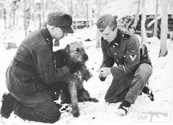 107618 - Животные на войне