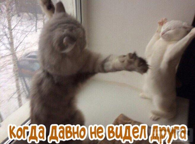 107705 - Смешные видео и фото с животными.