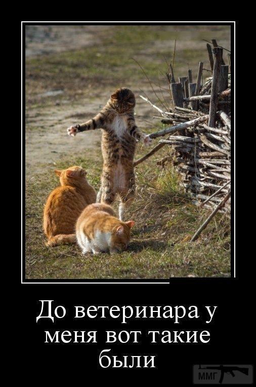 107785 - Смешные видео и фото с животными.