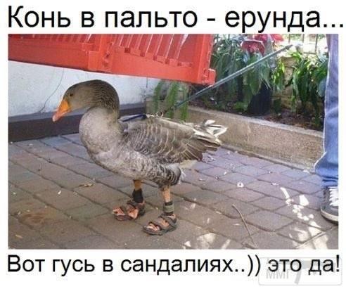 108142 - Смешные видео и фото с животными.