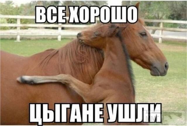 108311 - Смешные видео и фото с животными.