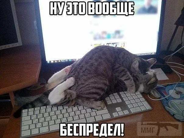 108312 - Смешные видео и фото с животными.