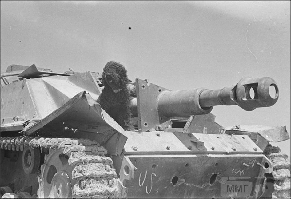 108657 - Животные на войне