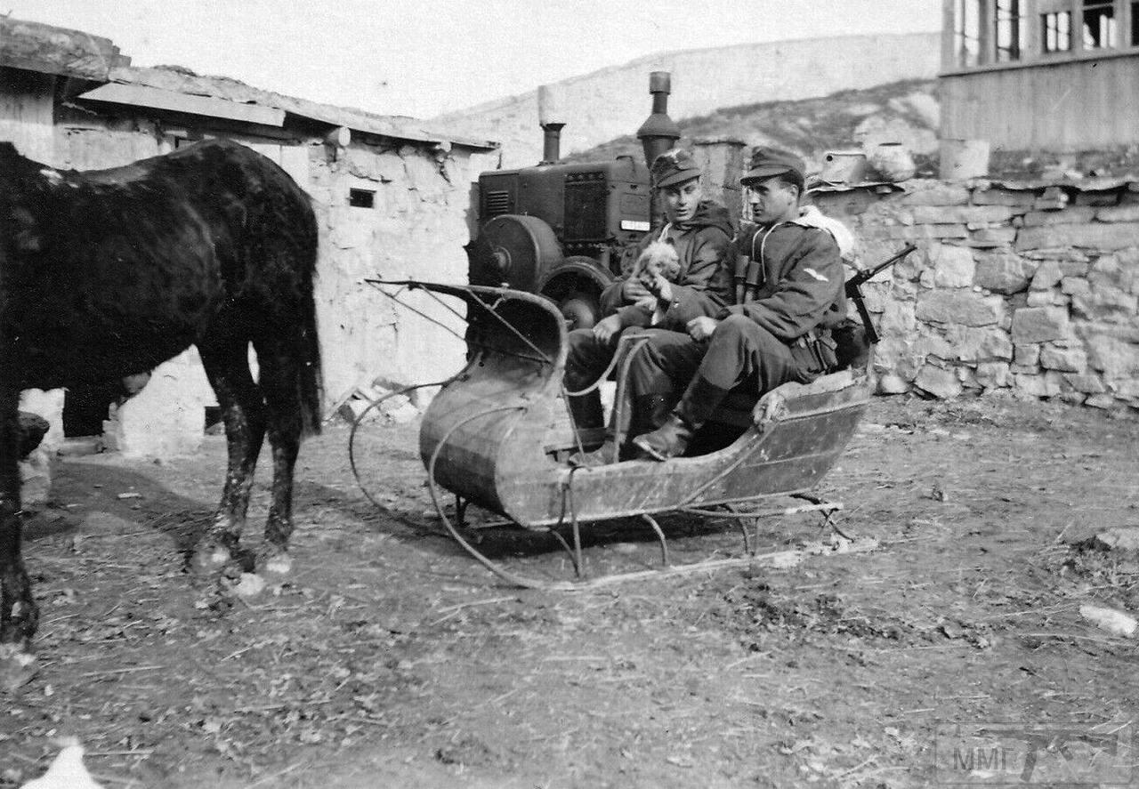 108816 - Животные на войне