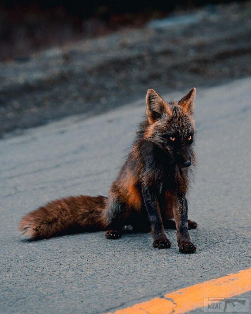 109319 - Красивые животные