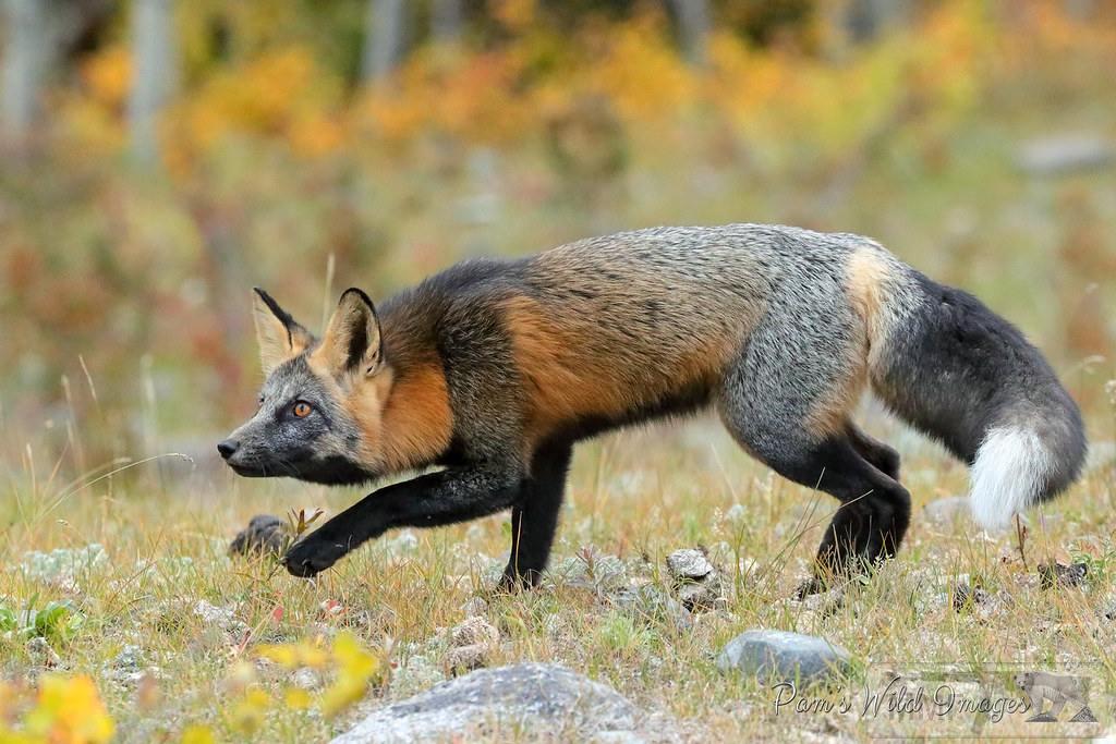 109320 - Красивые животные