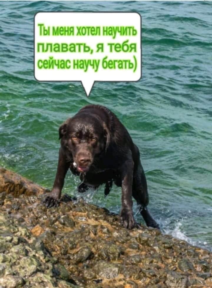 109448 - Смешные видео и фото с животными.