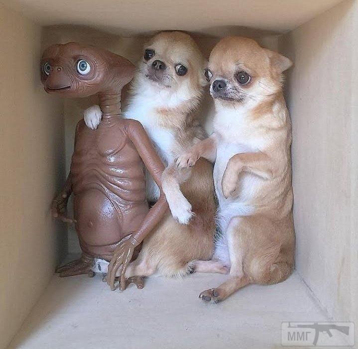 109853 - Смешные видео и фото с животными.