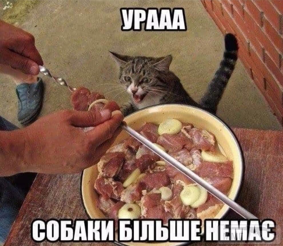 109946 - Смешные видео и фото с животными.