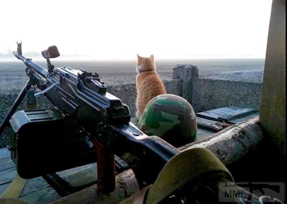 109947 - Животные на войне