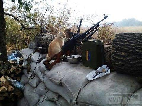 109949 - Животные на войне