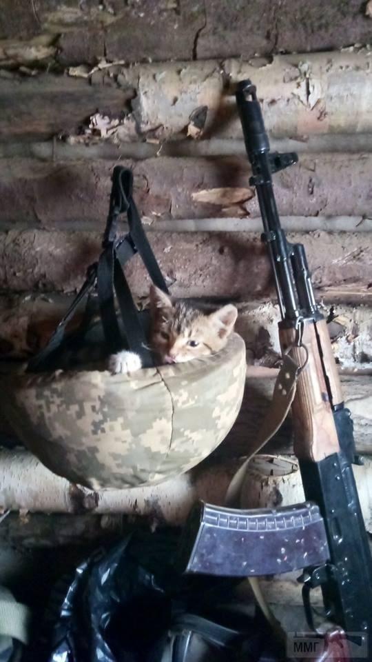 109959 - Животные на войне