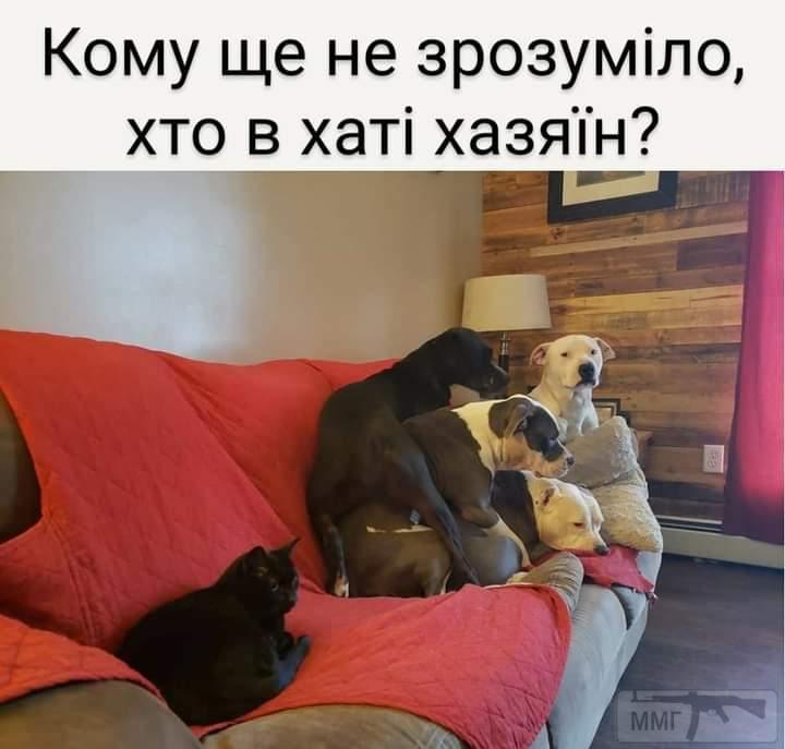 110059 - Смешные видео и фото с животными.