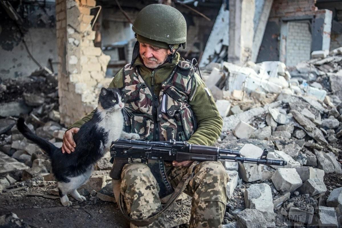 110300 - Животные на войне