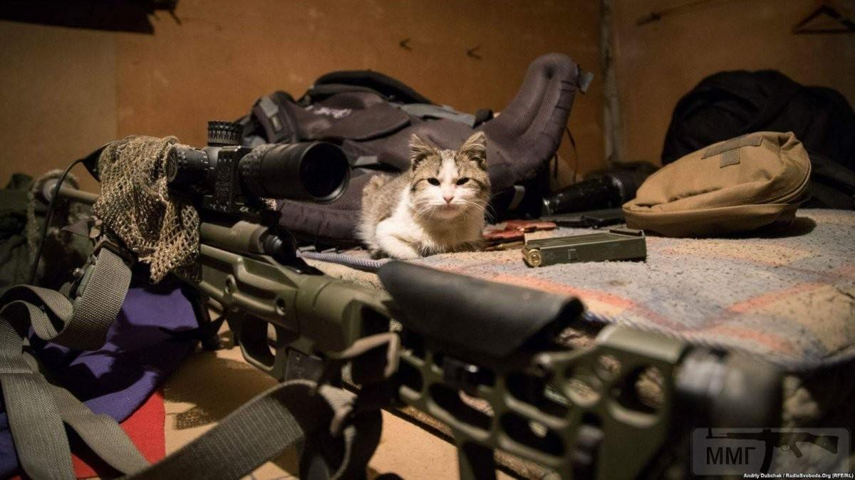 110303 - Животные на войне