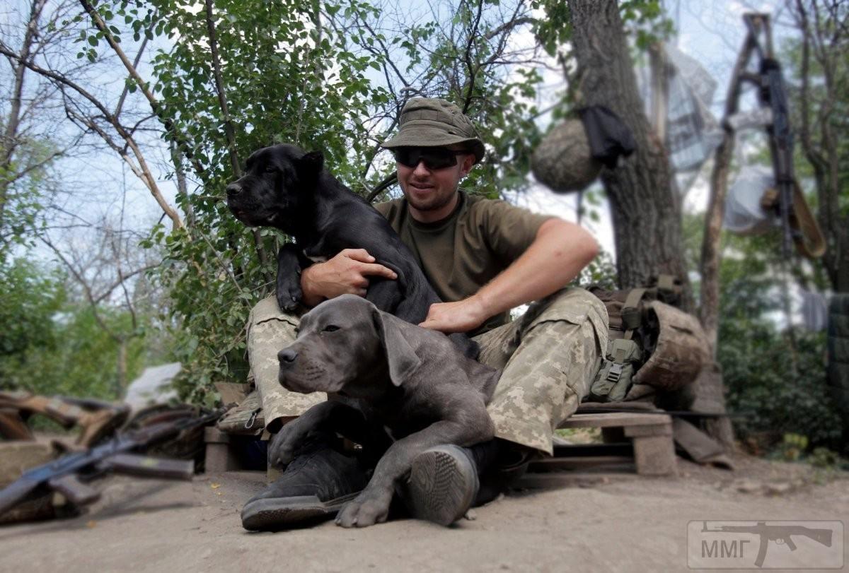 110306 - Животные на войне